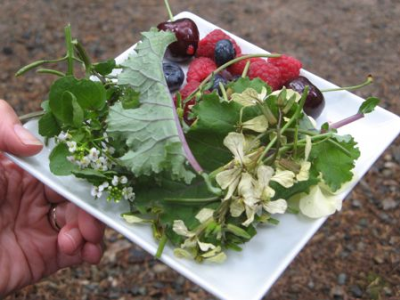 Foraging Tours