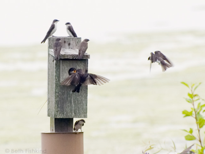 Bird boxes and bat boxes, as well as kiosks indicating wildlife