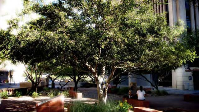 What are the best Street Trees for PHOENIX?