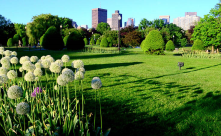 BOston from the Public Garden