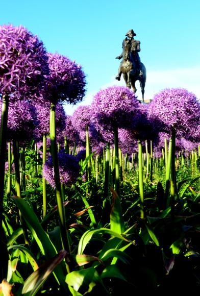 George Washington Icon Statue, Boston Public Garden, Boston Harmonic & Aesthetic correlation between man-made & Nature