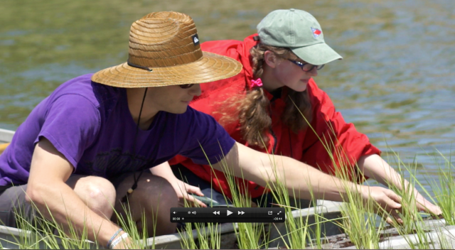 Mary Helen Talalas plants grass on floating island with student from UMass Boston as part of the Green Harbor Project.