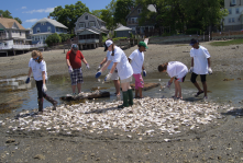 Girl Scout Troop 79434 help spread oyster shells habitat with Dr. Andrew Jay of The Oyster Project.