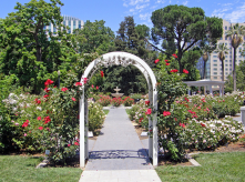 The World Peace Rose garden in Capitol park