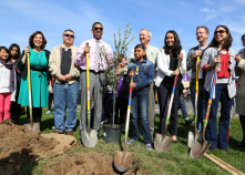 Mayor Johnson plants a tree in honor of California Arbor Week, 2012.