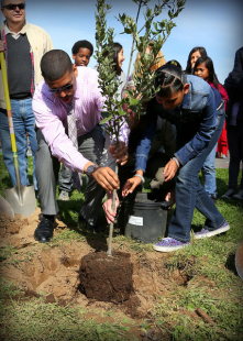 Mayor Johnson plants an oak in honor of California Arbor Week -2012.