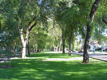 Neighborhood and Community Parks