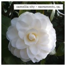 camellia city!