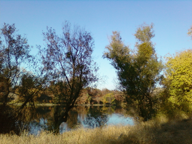 American River Parkway - a wilderness area in the middle of the City