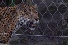 Sacramento Zoo