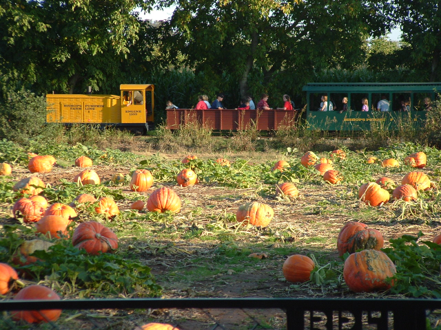 Bishop's Pumpkin Farm in Wheatland.