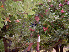 Picking apples in Apple Hill.