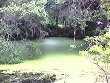 A pond in Airlie Gardens