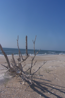 Masonboro Island (I know it's not Wilmington but when we tell friends/fam to come to ILM, that also means beach.