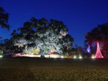 Airlie Oak - Enchanted Airlie 2012