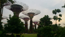 "Singapore - Gardens on the Bay - Super trees<br/><br/>http://www.gardensby<wbr/><span class=""wbr""></span>thebay.com.sg/en/the<wbr/><span class=""wbr""></span>-gardens/attractions<wbr/><span class=""wbr""></span>/supertree-grove.htm"