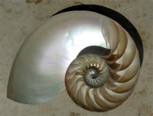 Fibonacci_shell