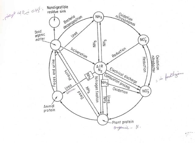 nitrogen_cycle