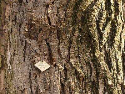 Landmark Trees