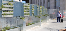 Green construction dividers, with living plants in modules, to beautify a construction site in University City, Philadelphia, USA.