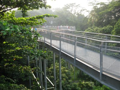 Walking on Top of Forest