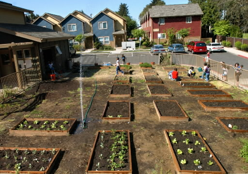 Turning empty lots into community gardens