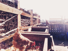 """Dublin urban rooftop farm using recycled materials only: <br/>http://popupcity.net<wbr/><span class=""""wbr""""></span>/2013/04/modular-urb<wbr/><span class=""""wbr""""></span>an-rooftop-farm-uses<wbr/><span class=""""wbr""""></span>-only-recycled-mater<wbr/><span class=""""wbr""""></span>i"""