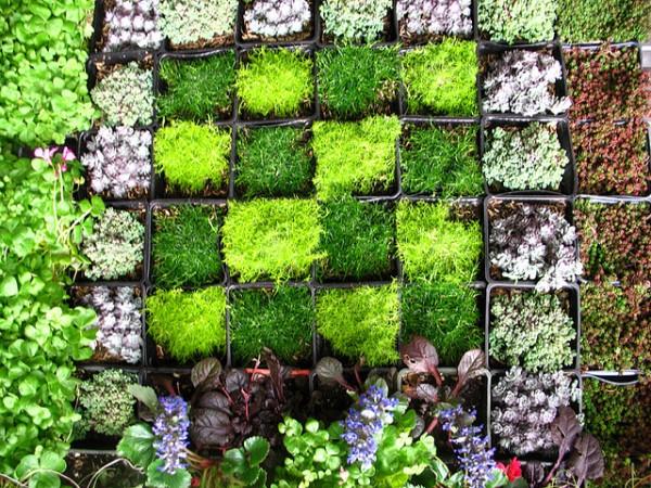 Wall garden.