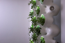 CASE and SOM's AMPS Living Green Wall