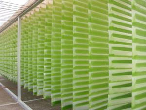 Production of algae for sustainable energy