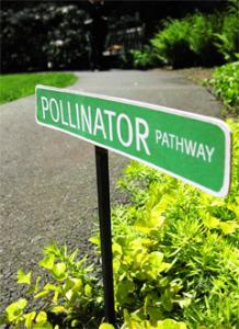 Building pollinator and garden pathways in cities!