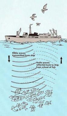 The sonar