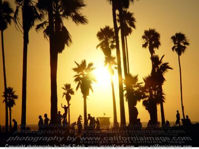 Venice Beach Live Cameras