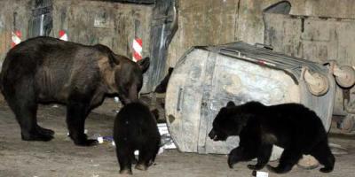 The e-Bears from Brasov, Transylvania