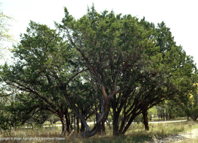 TREES. Native Texas trees are beautiful in their own right. They also survive without the city having to water them.