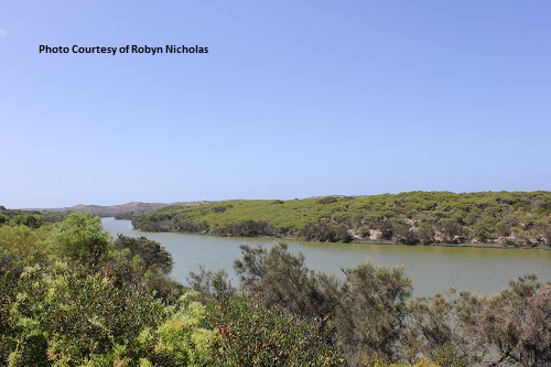 Greenough River Estuary Survey