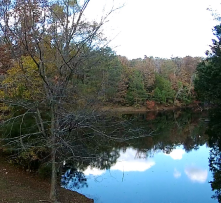 Cedar Pond is so relaxing for a picnic.