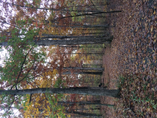 This is a photo of a trail I hiked in the Fall of 2017. I love the beautiful colors and cool fall breezes.