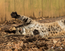 Nature Station Bobcat: Brings families to connect with the land and ecology of LBL.