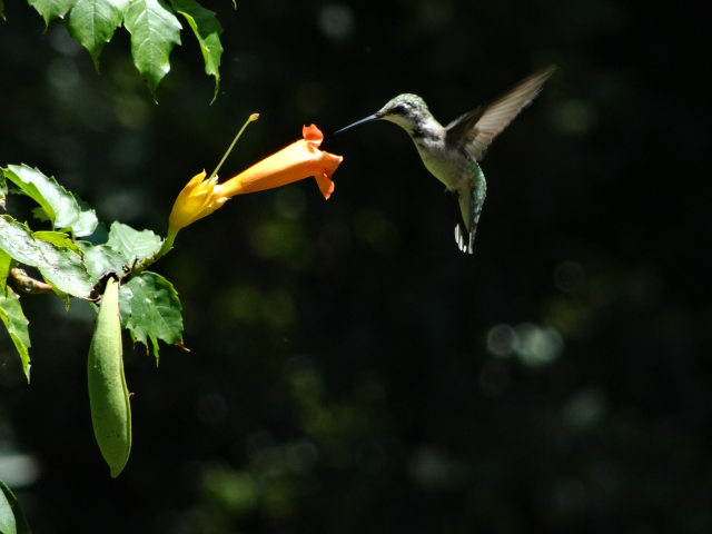 Hummingbirds at NS: Inspiration and awe at the numbers of birds. It gets people excited about the outdoors. Very fun!