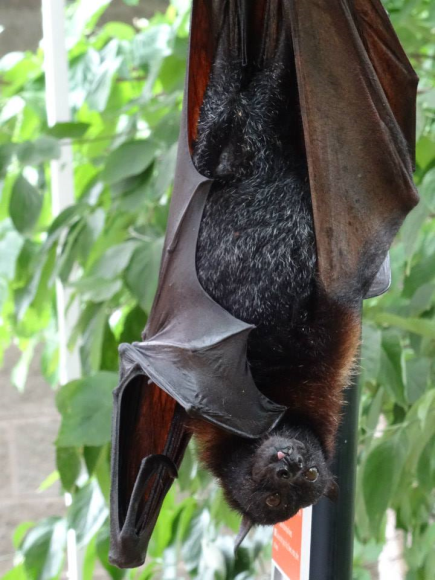Cool Critter Day at NS: Great fun day for kids to learn about global biodiversity. Learn about bats!