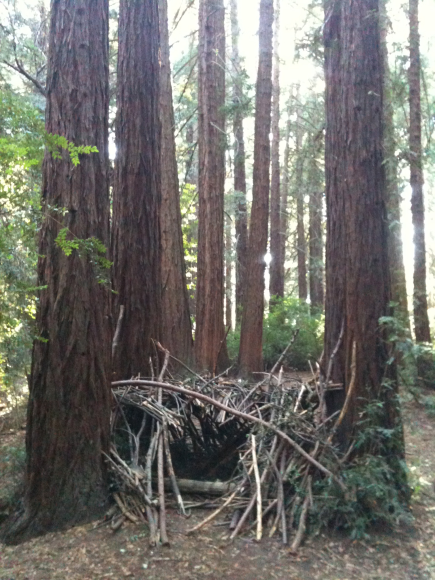Redwood forts on Big Trees Trail, Joaquin Miller Park.