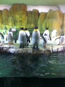 Penguins showing off at the Omaha Zoo!!