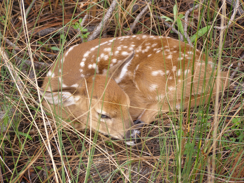 Balancing Wildlife Management and Recreation